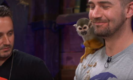 Monkey Who Barfed And Pooped On Sea Of Thieves Dev During Livestream Is Doing Just Fine
